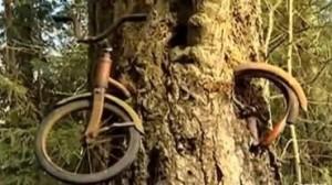 Biçikletën e kishte ngrënë pema para 50 vjetësh