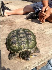 Breshka që bëhet nervoze kur nuk pi duhan!
