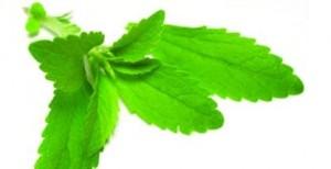 Bima stevia më e ëmbël se sheqeri, por me zero kalori