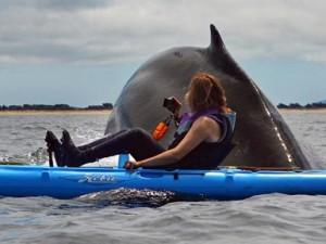 Një takim i papritur me balenën