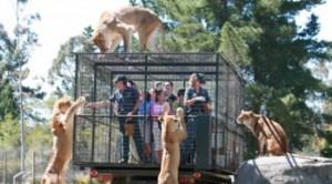 Kopshti zoologjik ku njerëzit mbahen në kafaz