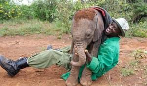 Vokali i elefantit punon si ai i njeriut