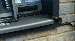 Gruaja gjen gjarprin teksa merrte paratë në bankomat